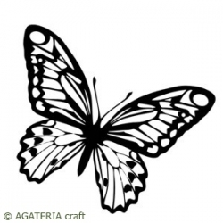Motyl 2