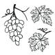 Winogrona - zestaw