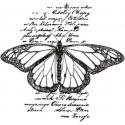 Motyl na tle
