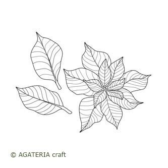 Gwiazda betlejemska 3 - kwiat + liście