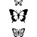 Motyle zestaw 3szt