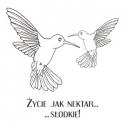 Kolibry 1