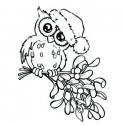 Owl on mistletoe