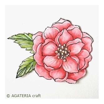 https://sklep.agateria.pl/pl/kwiaty/727-peonia-2-5902557824199.html